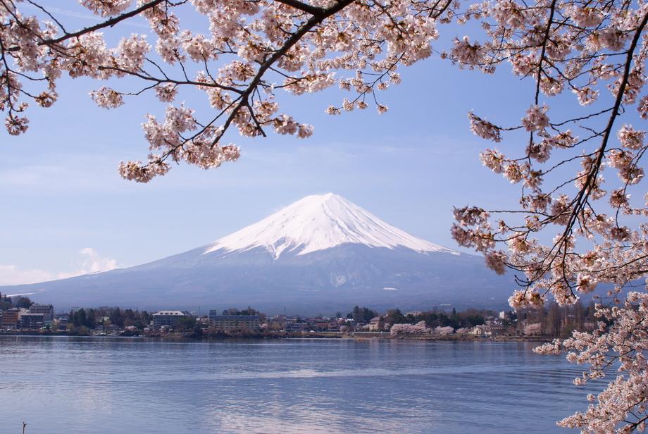 Large lake kawaguchiko sakura mount fuji 3